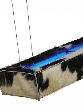 D-cow
